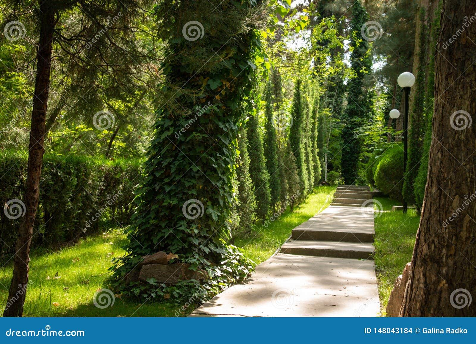 Straße ist im Wald unter den Bäumen, beleuchtet durch die Strahlen der Sonne Hintergrund