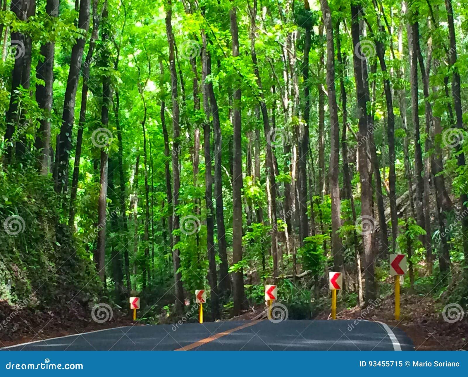 Mahagonibaum  Straße Zum Mahagonibaum-Wald Stockbild - Bild von gesehen ...