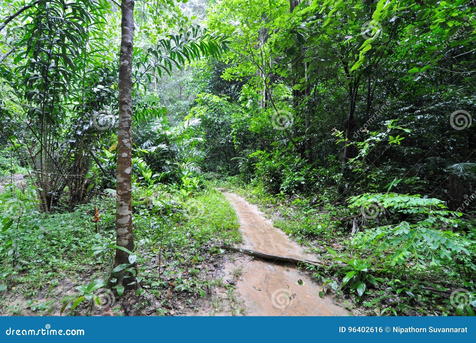 Strassen Im Tropischen Regenwald Stockfoto Bild Von Boden