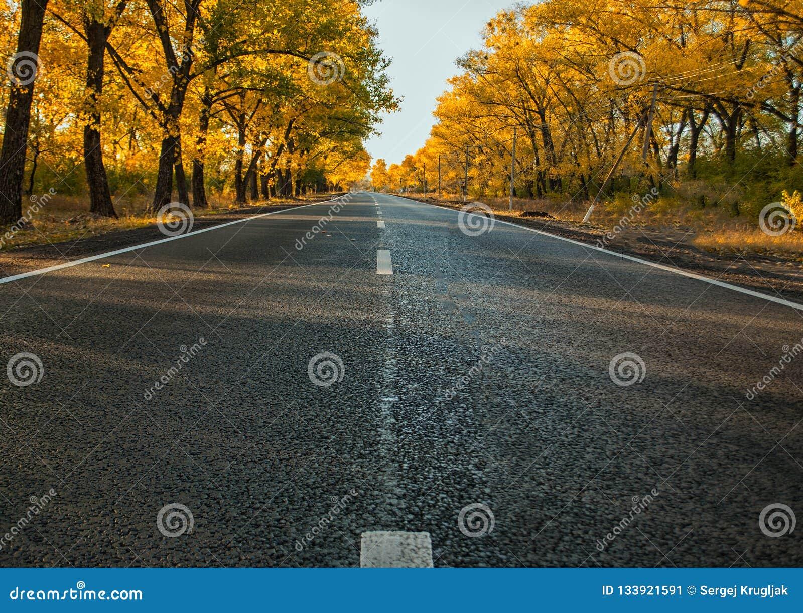 Straßendecke am Herbstnachmittag und -bäumen
