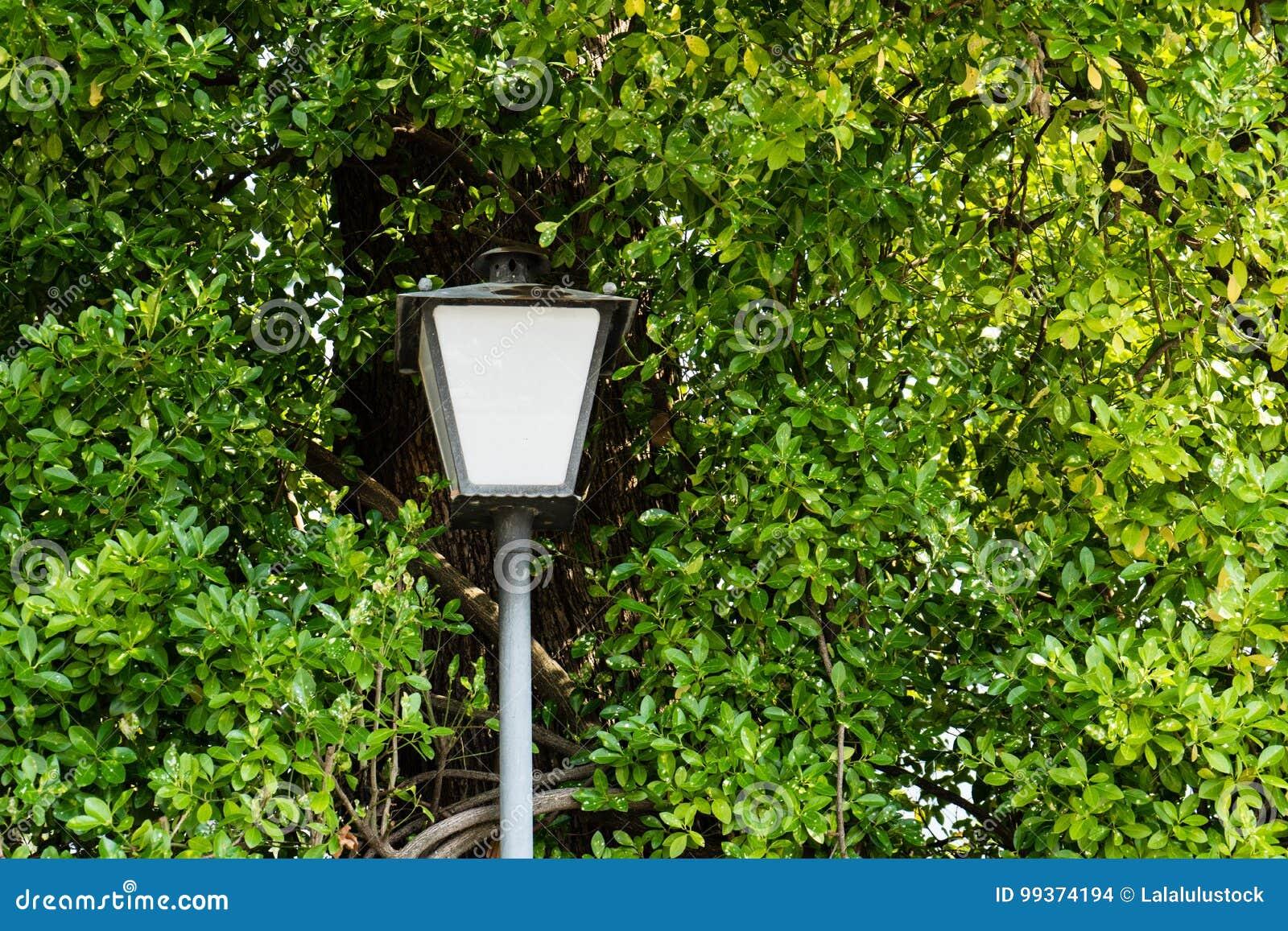 Straatlantaarnpool door een boom met bladeren wordt omringd dat