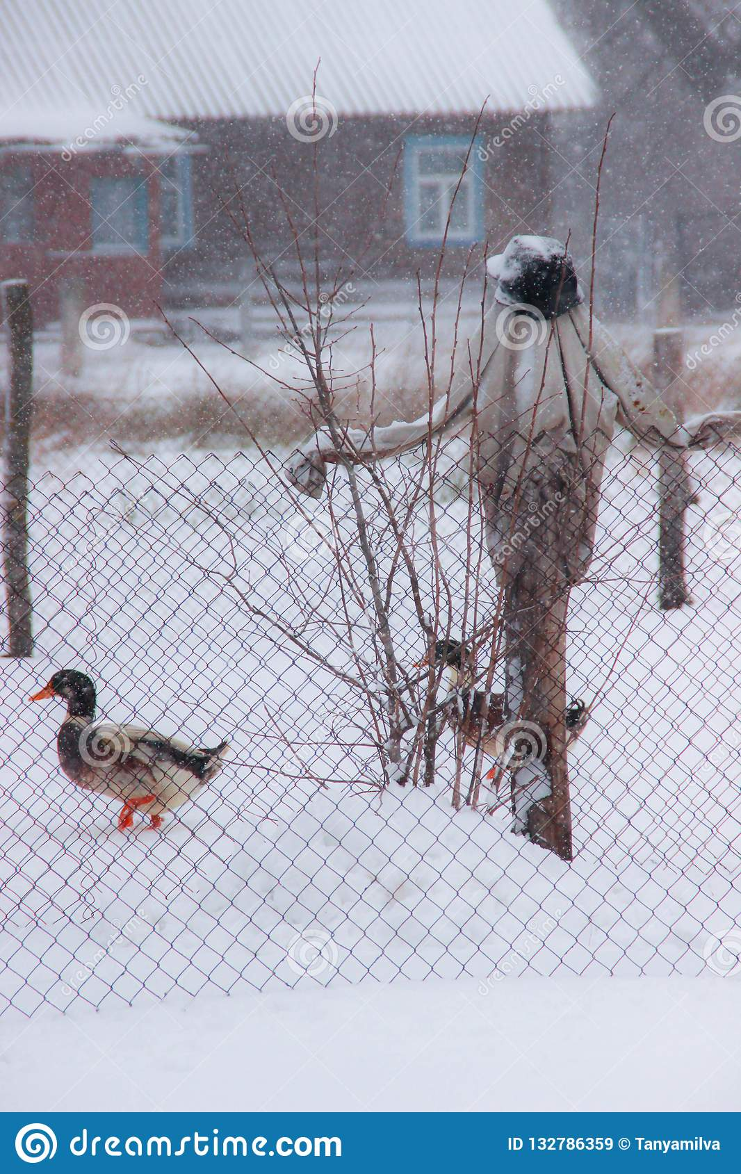 Strach na wróble w ogródzie w domowej kaczce i zimie