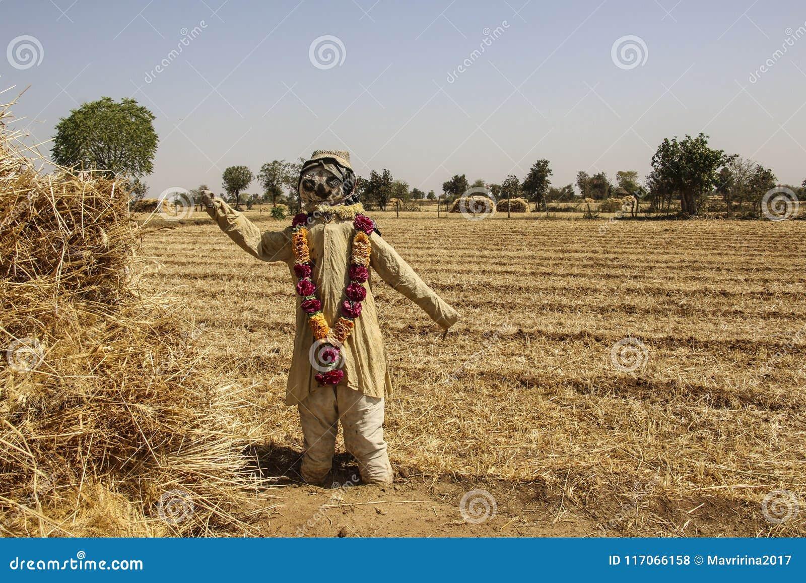Strach na wróble w wieś krajobrazie z złotymi polami