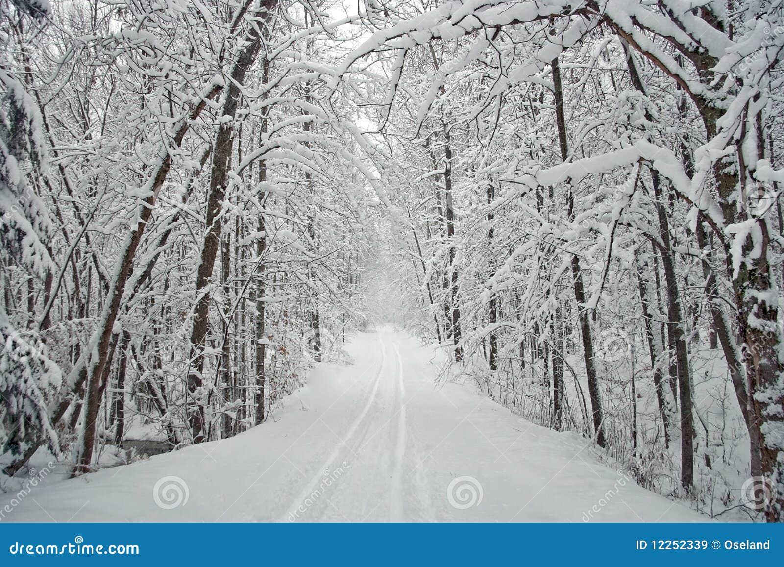 Strada allineata albero di inverno con neve immagini stock for Immagini per desktop inverno
