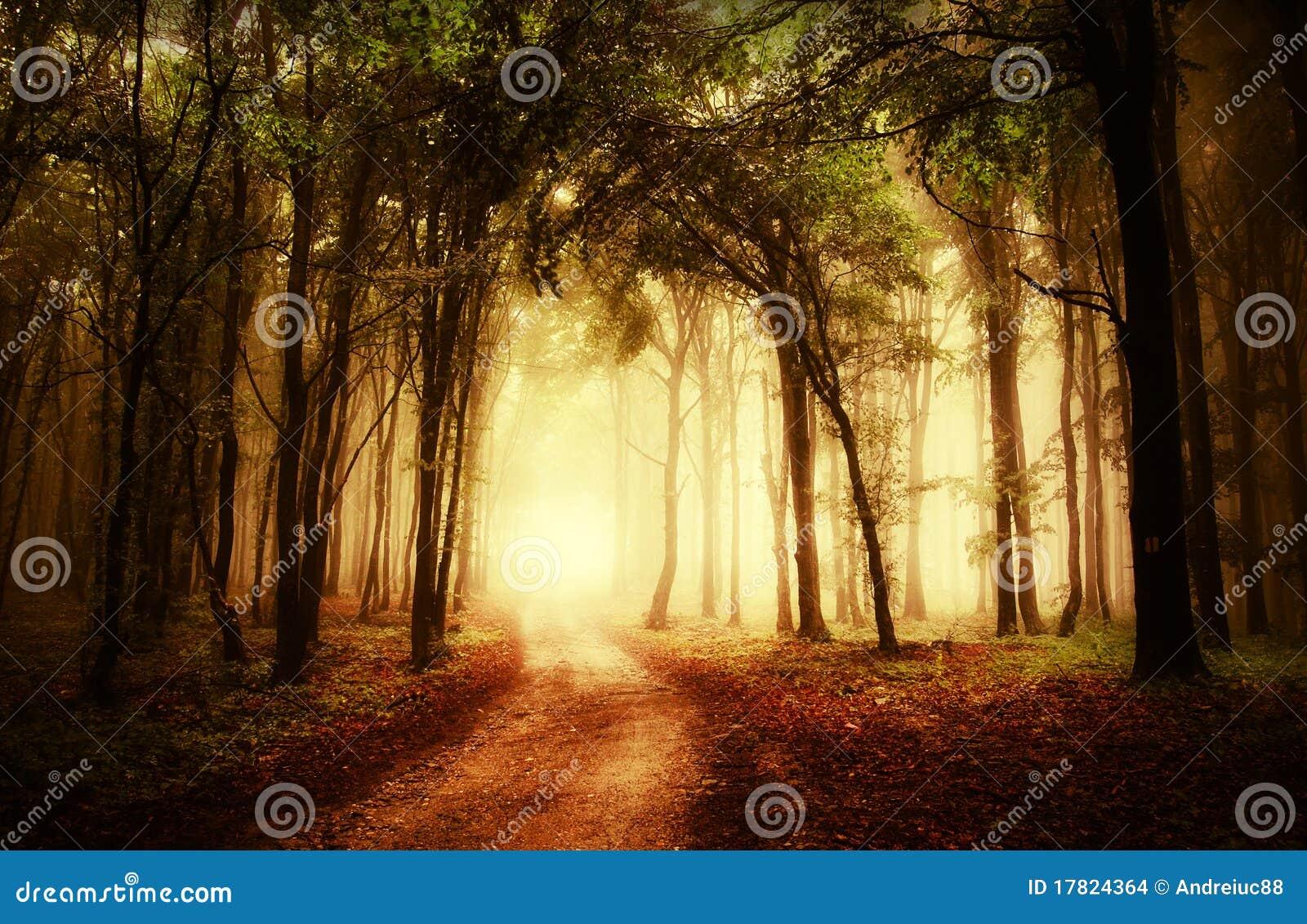 Strada attraverso una foresta dorata all autunno