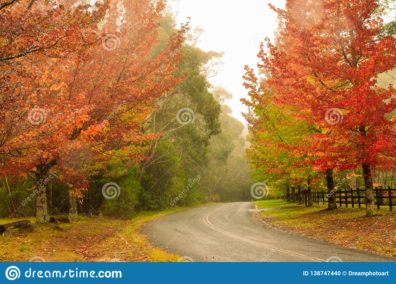 Strada campestre di Autumn Trees Beside A