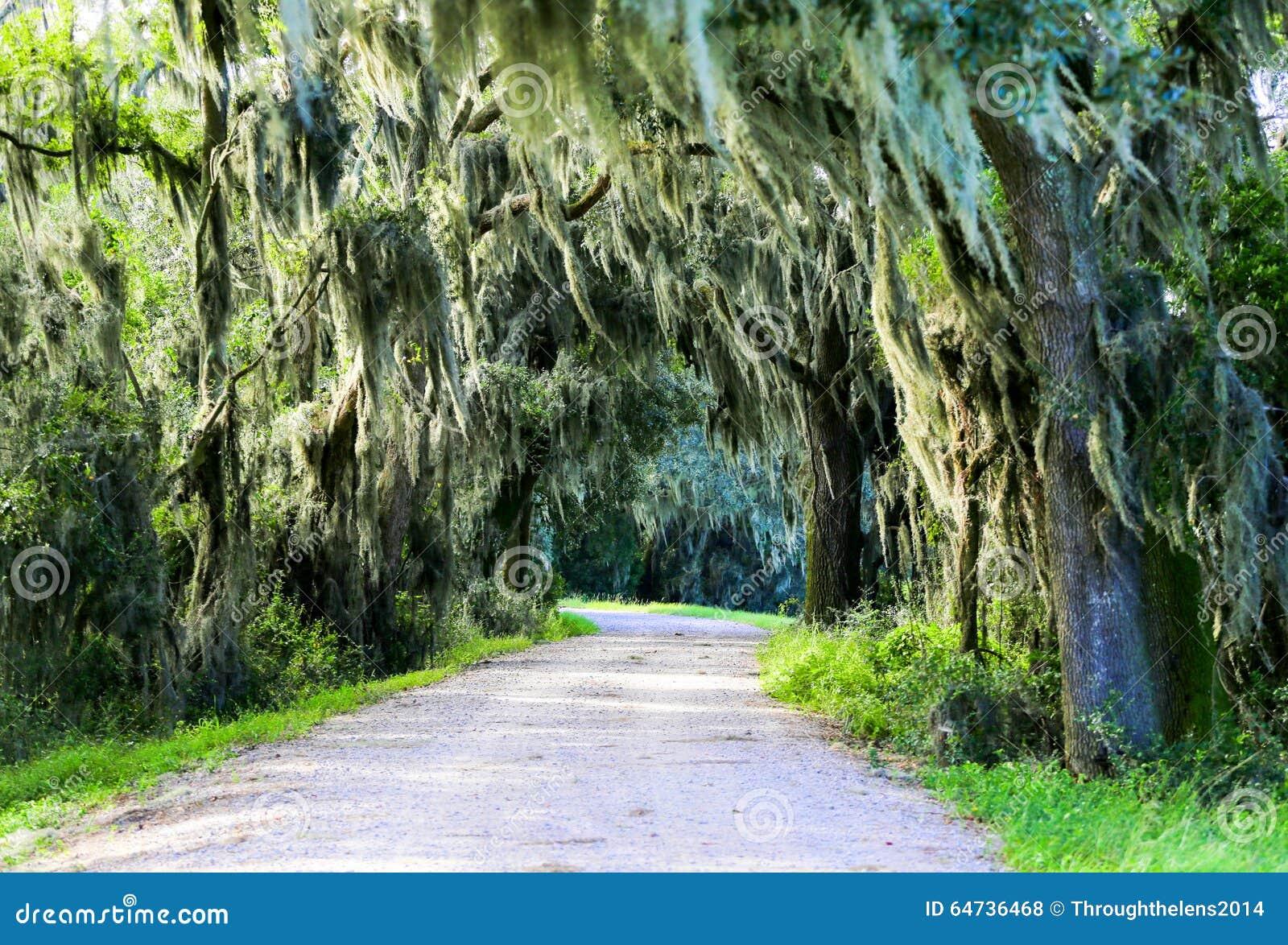 Strada con gli alberi che si sporgono con il muschio spagnolo in U.S.A. del sud