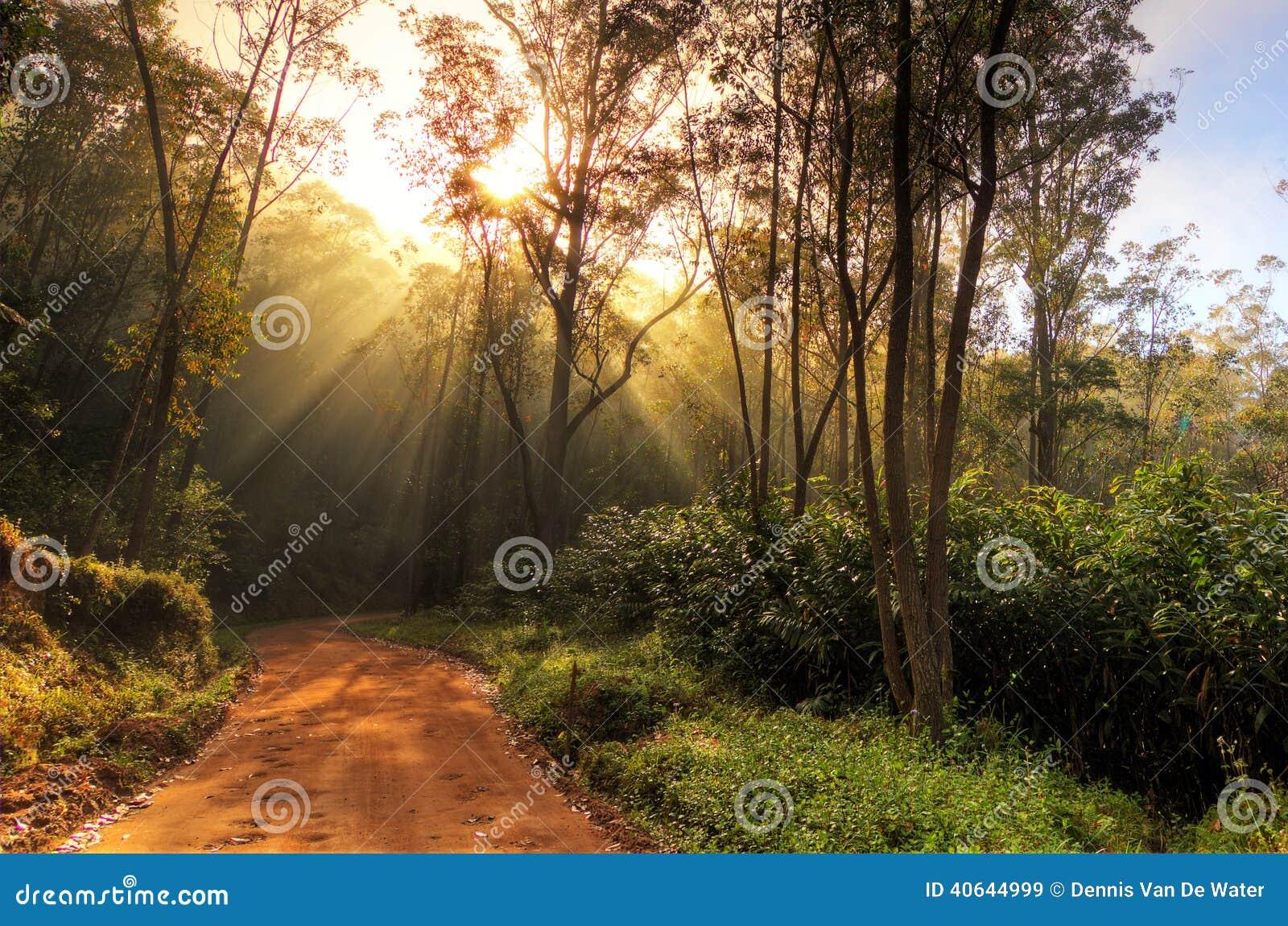 Strada della foresta pluviale immagine stock immagine di for Cabine della foresta lacustre