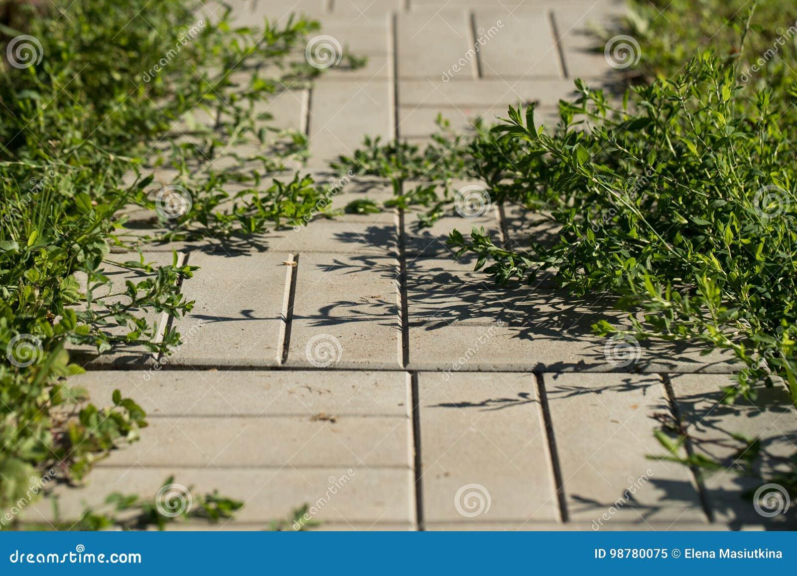 Strada delle mattonelle con erba nel giardino di estate immagine