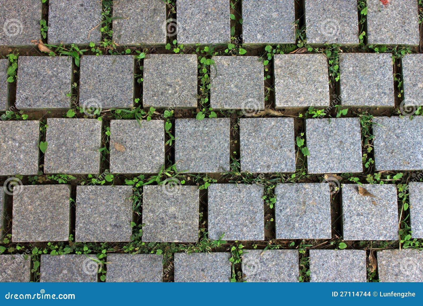 strada delle piastrelle per pavimento con la pianta verde