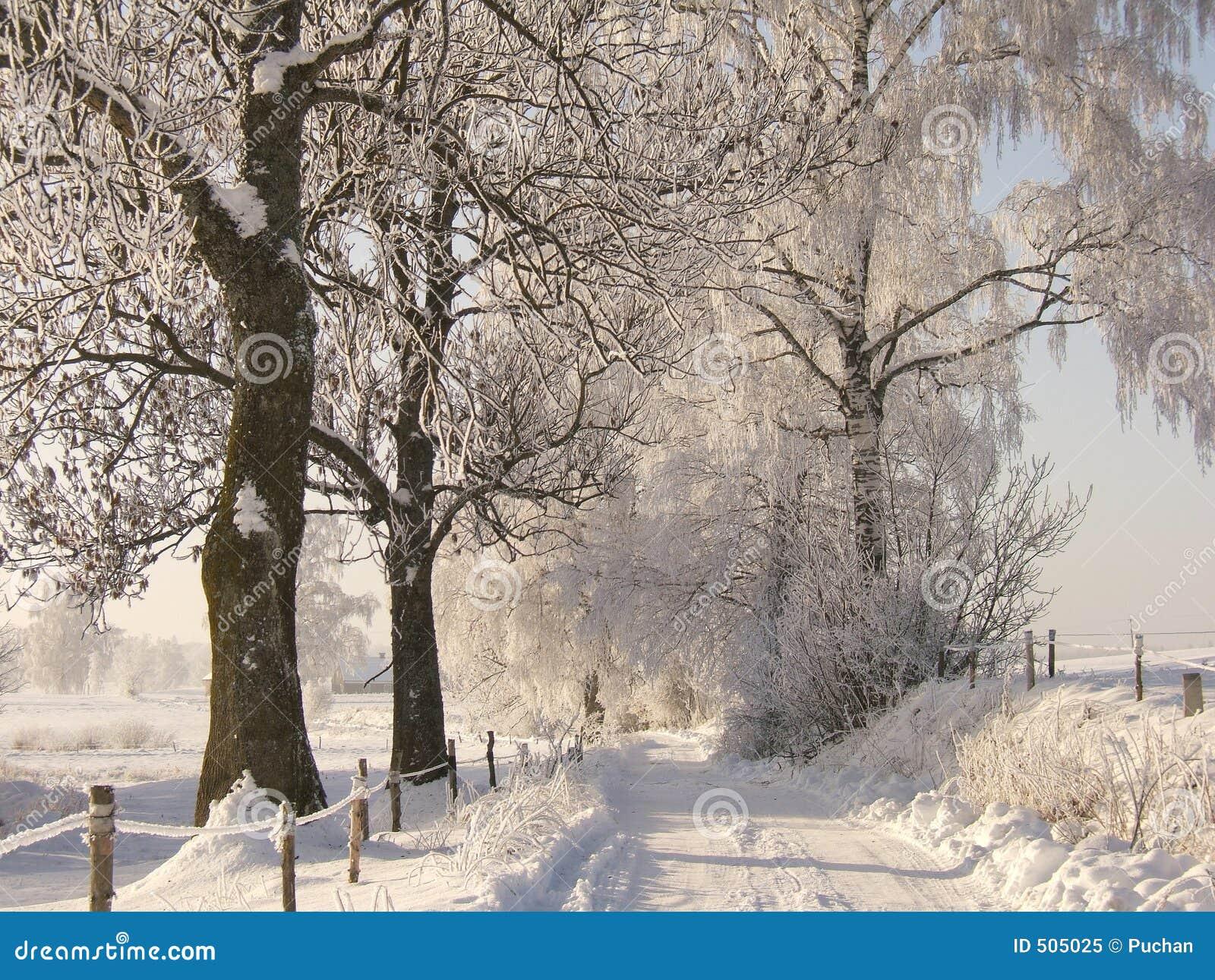 Strada di inverno