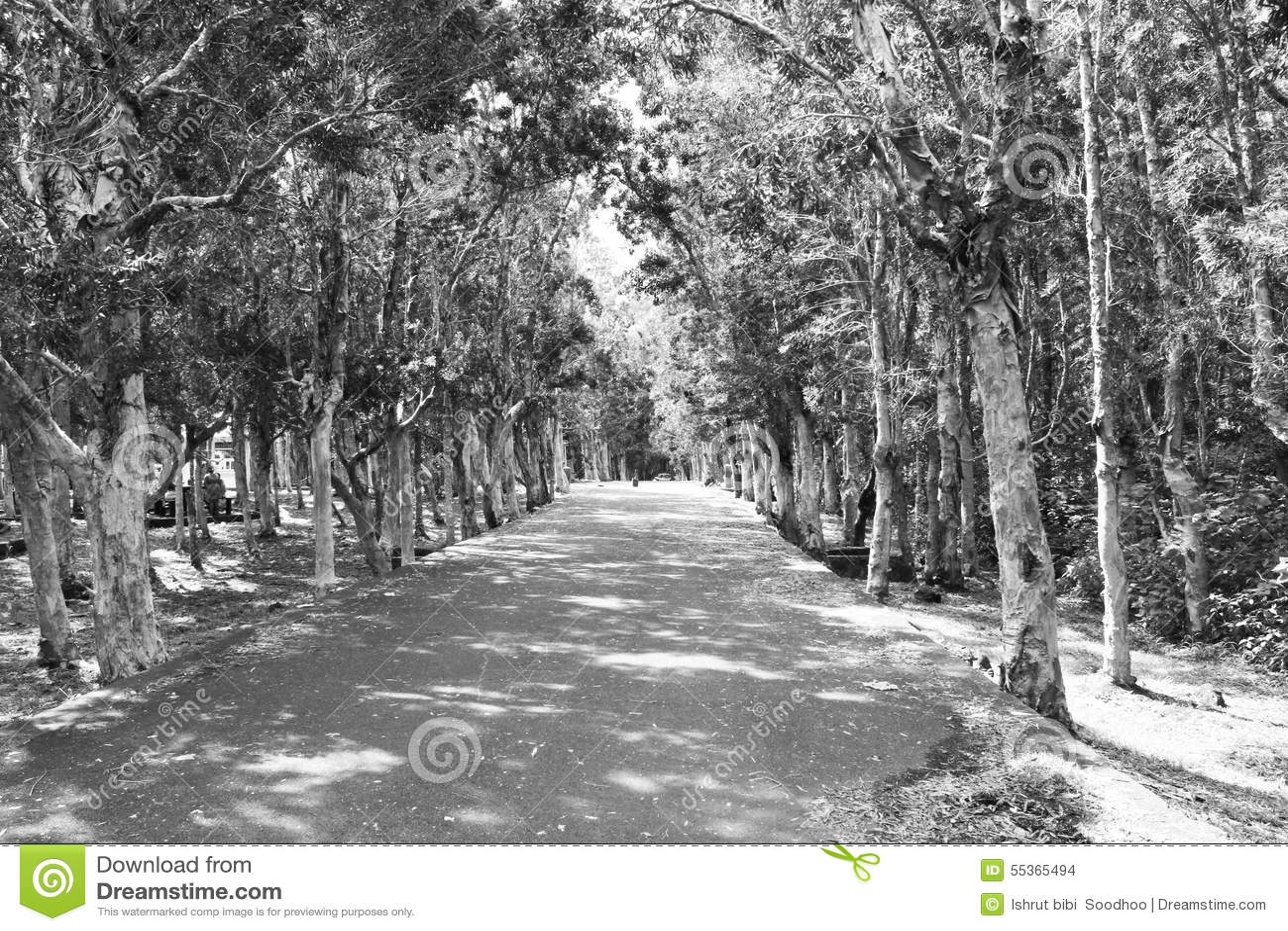 Strada fra la foresta