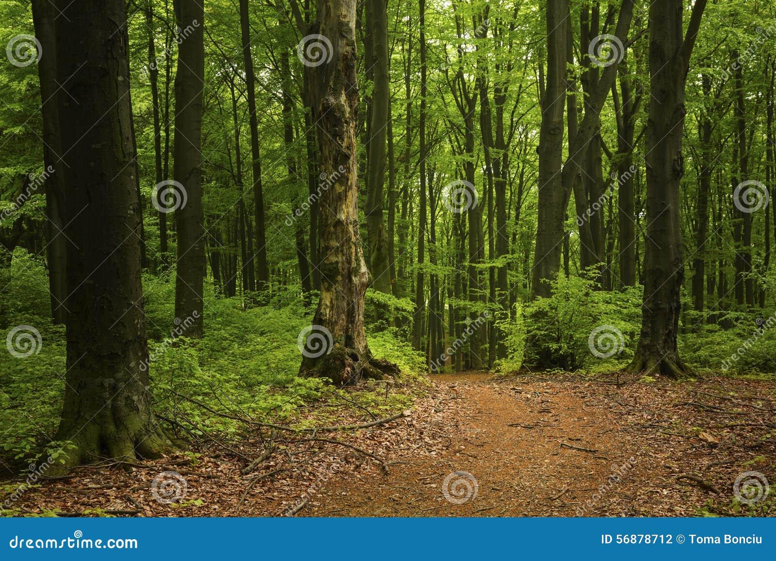 Strada nella foresta del fogy