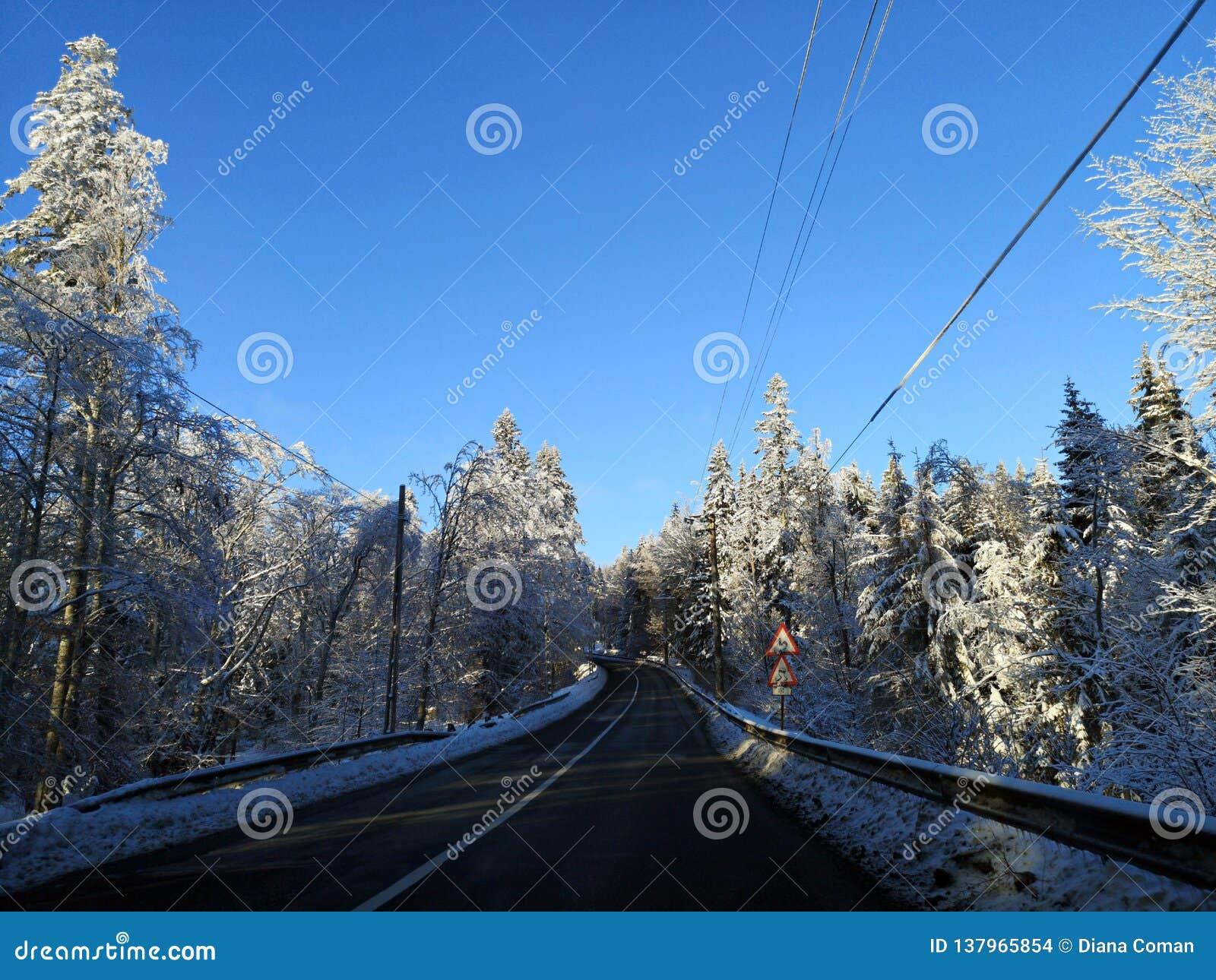 Strada nella foresta di inverno
