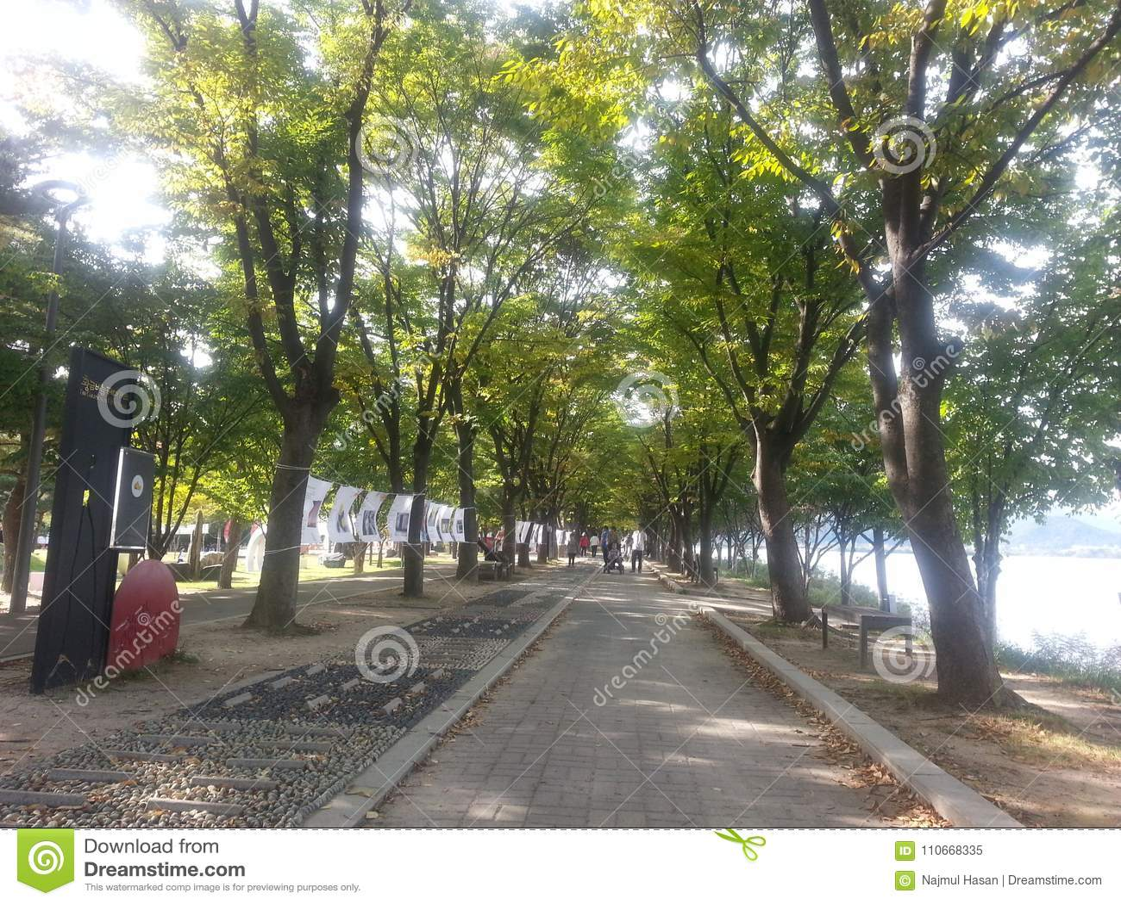Strada pedonale pavimentata o modo della passeggiata con gli alberi dai lati per la passeggiata pubblica
