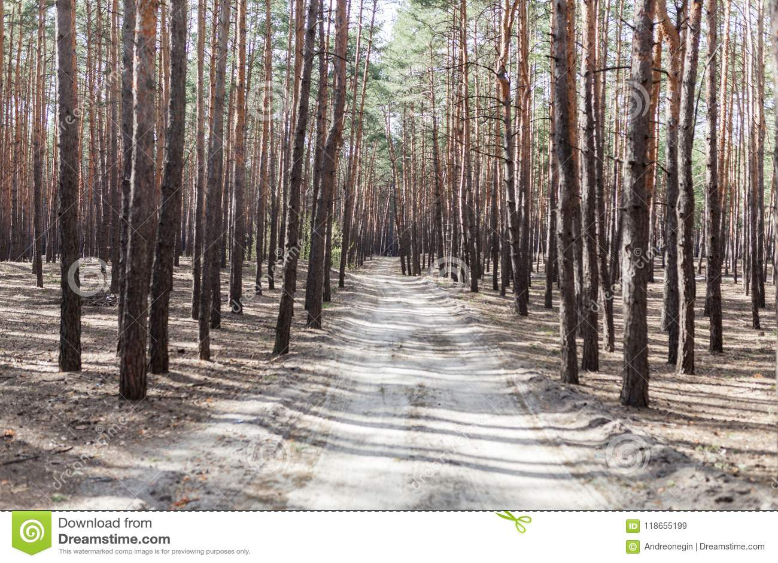Strada rurale dell abetaia