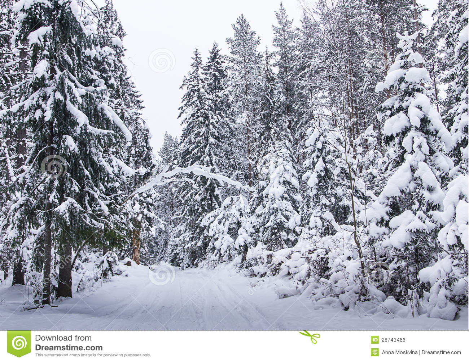 Strada russa della neve della foresta di inverno immagine - Animali in inverno clipart ...