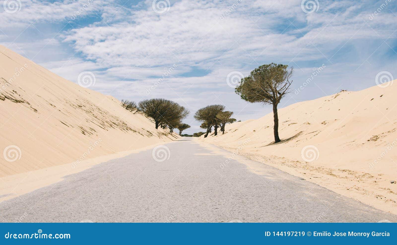 Strada sola a Cadice