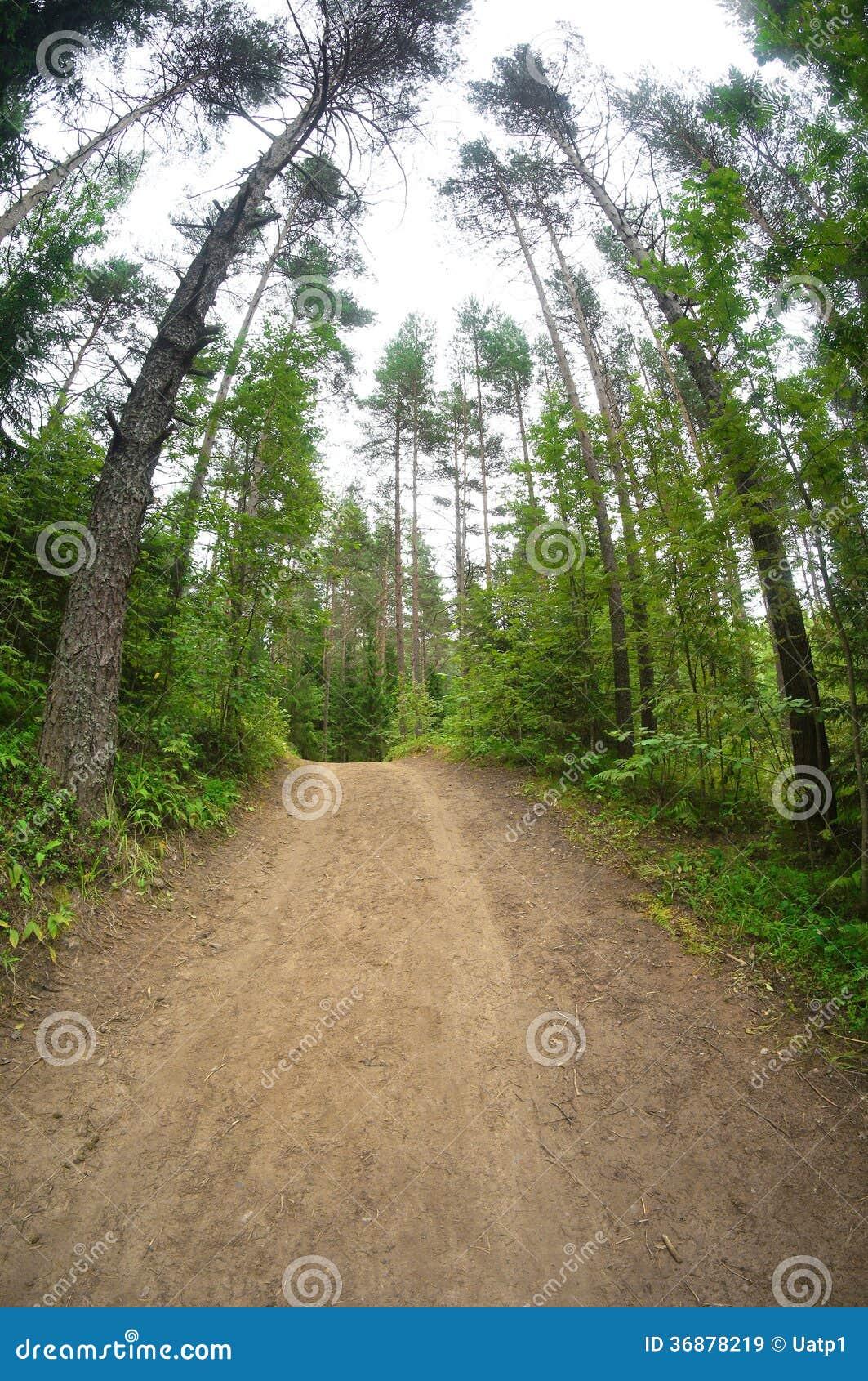 Download Strada in una foresta immagine stock. Immagine di strada - 36878219