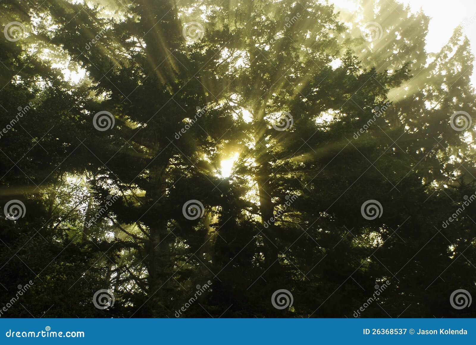 Strahlen des Tageslichtes