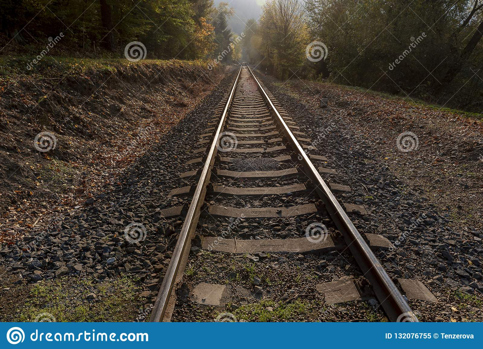 Straight rail tracks passing through the middle of the forest