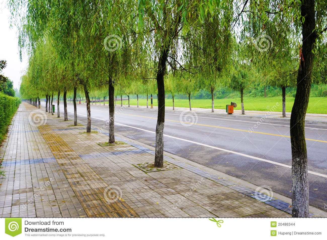 Straight road with trees stock photo. Image of challenge - 20486344 for Straight Road With Trees  110zmd