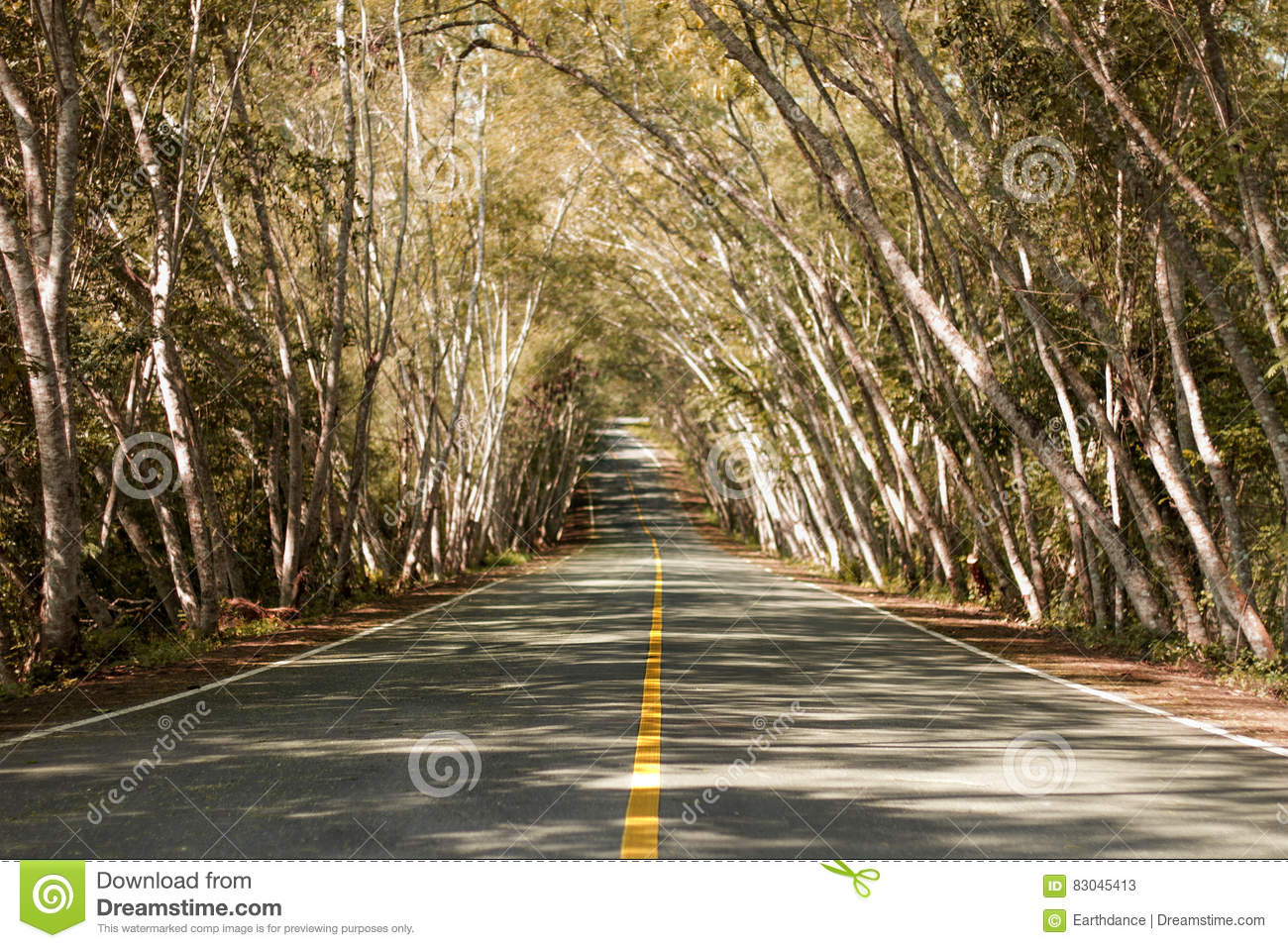 Straight road with trees stock image. Image of destination - 83045413 for Straight Road With Trees  570bof