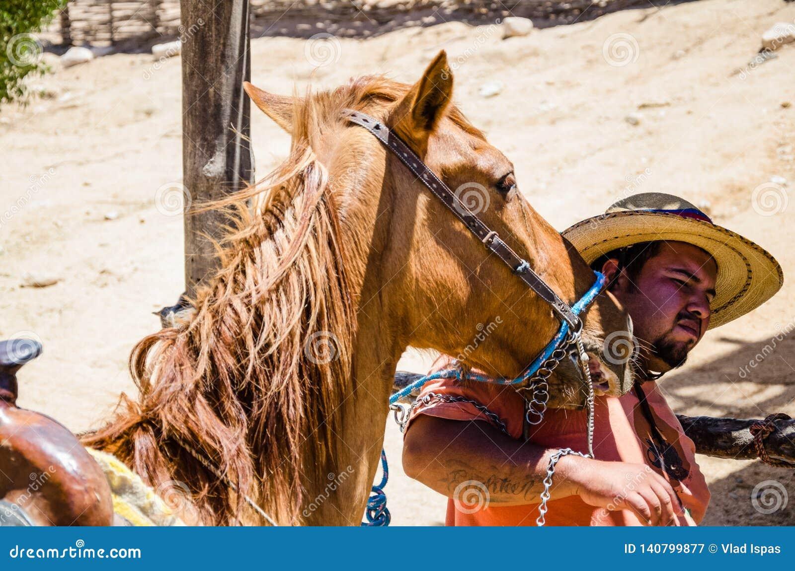 Strak omhooggaand paard op het strand