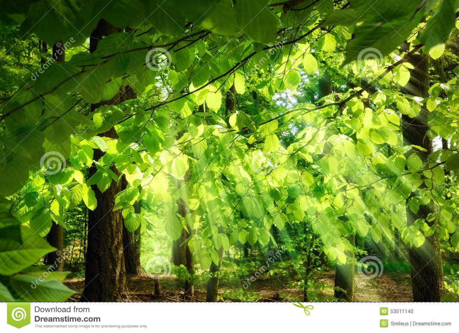 Stralen die van zonlicht door bladeren vallen