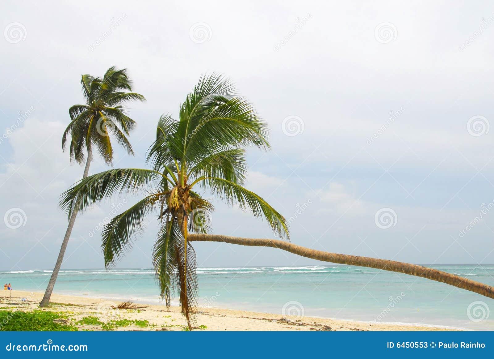 Strand dominicana macau r