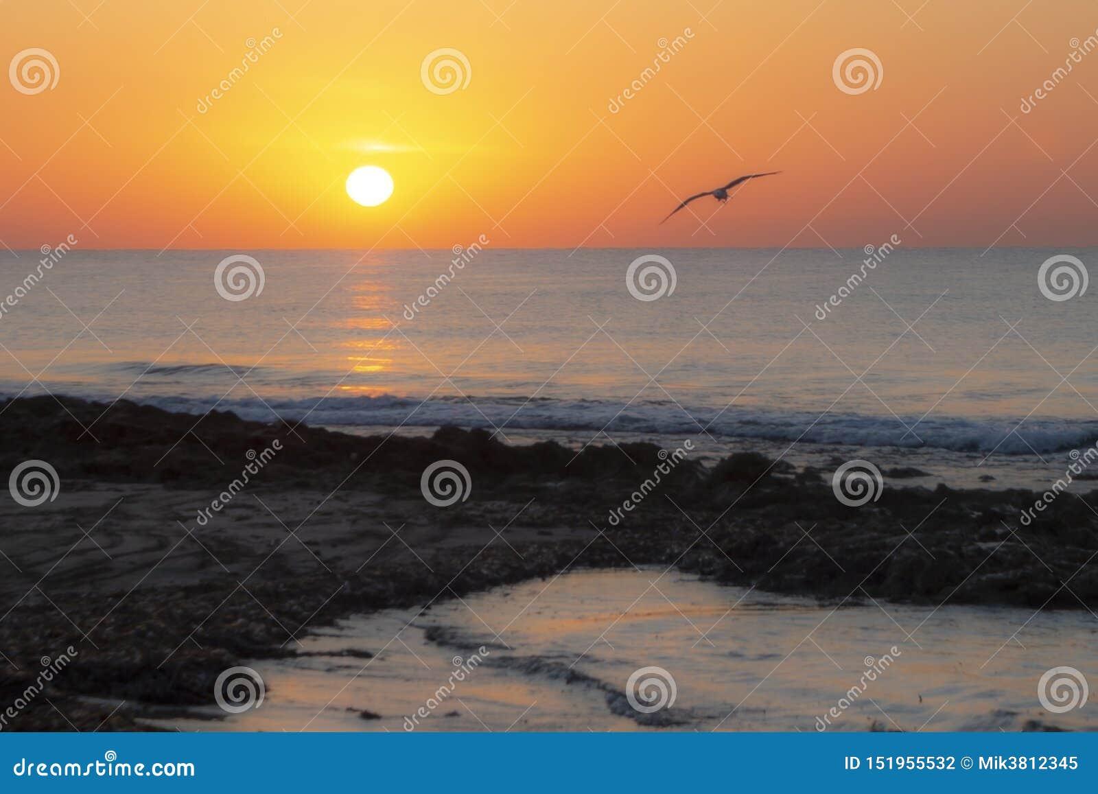 Strand en zonsondergang