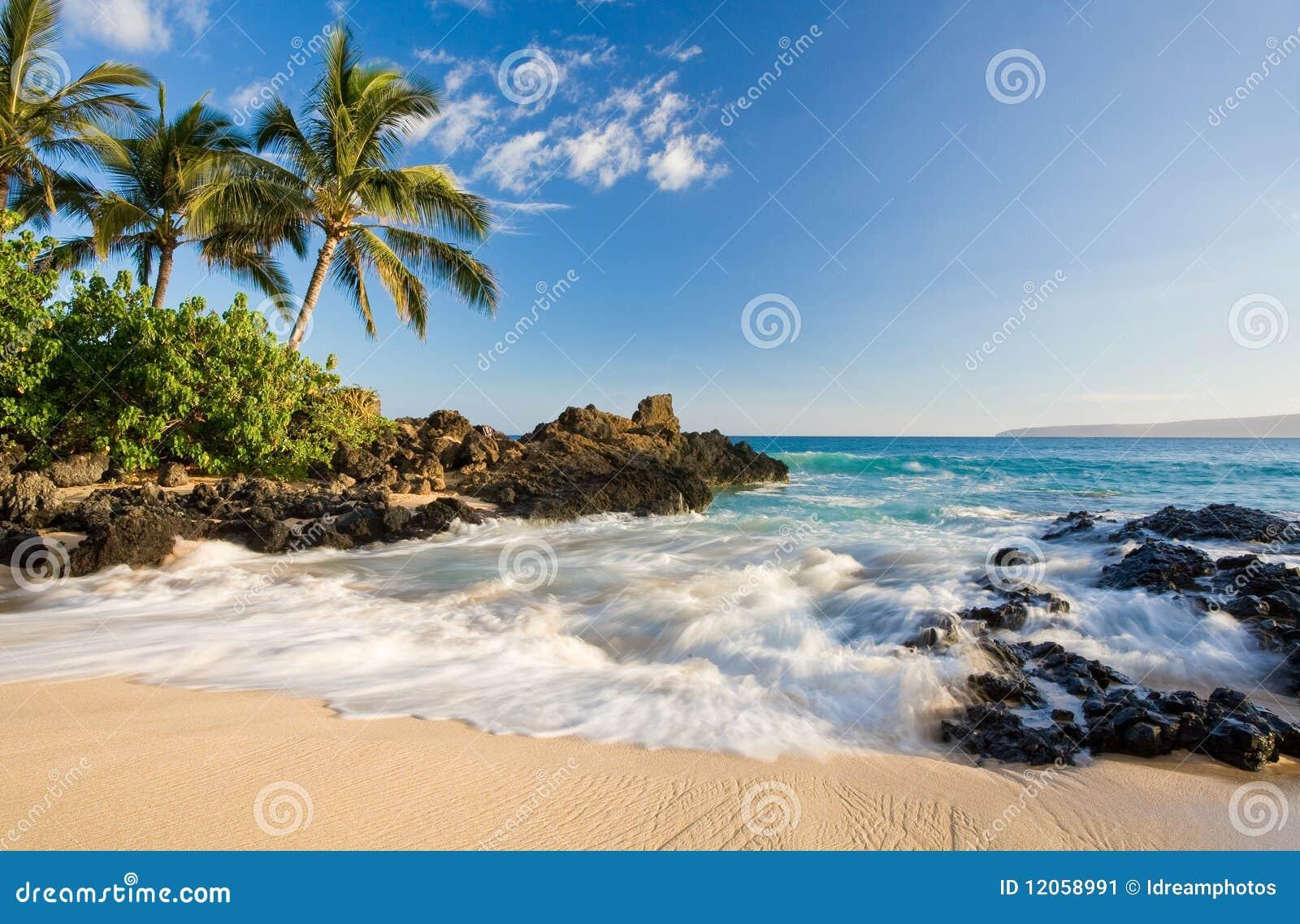 Strand hawaii tropiska maui