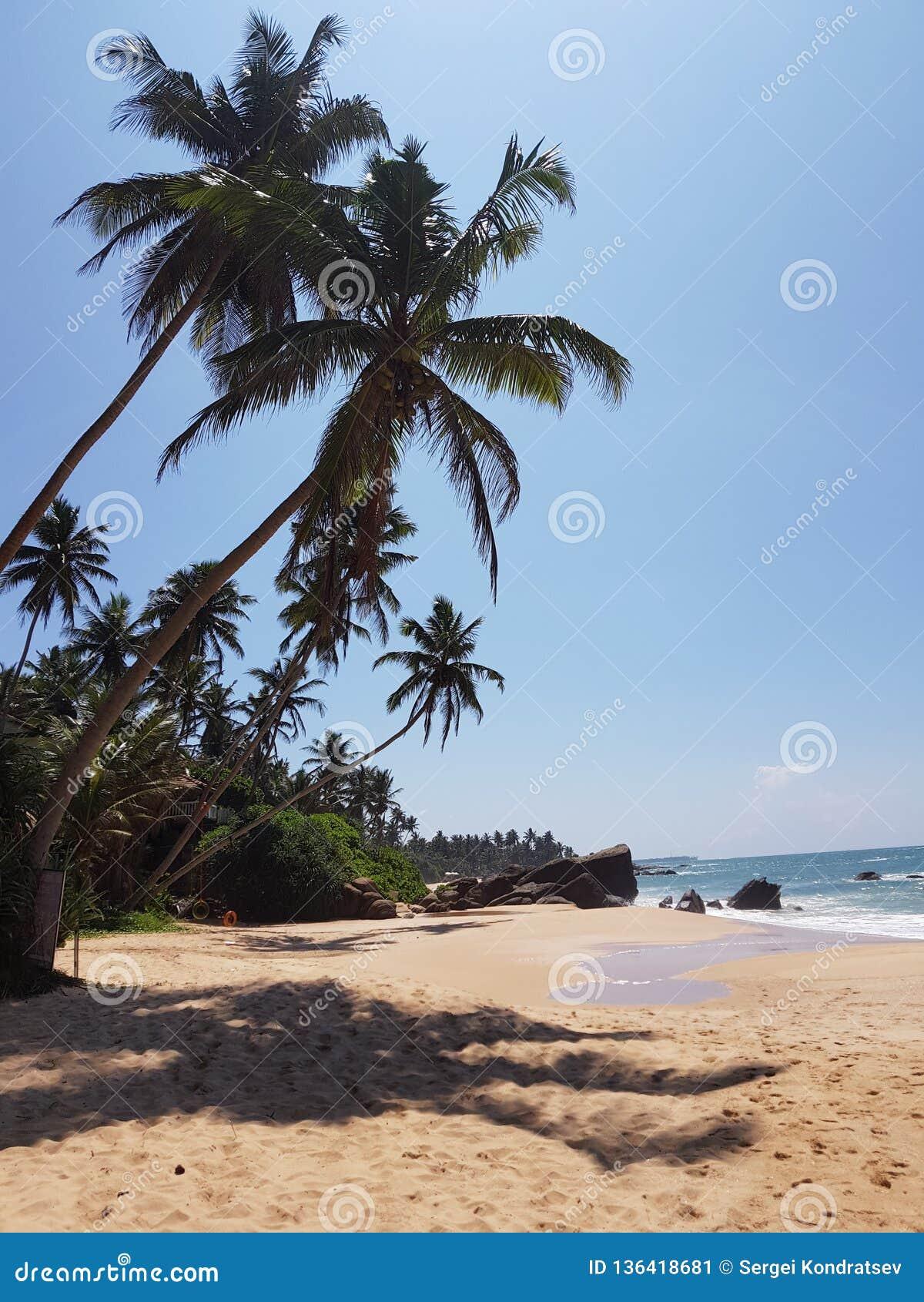 Strand met palmen, zandsteen en stenen