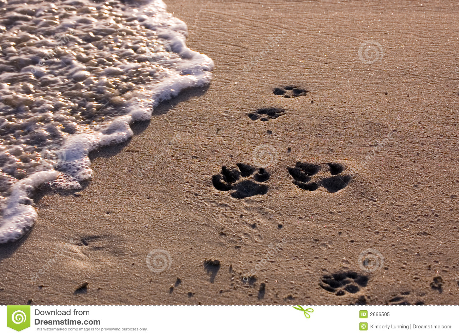 Strand mit Hundpawprints
