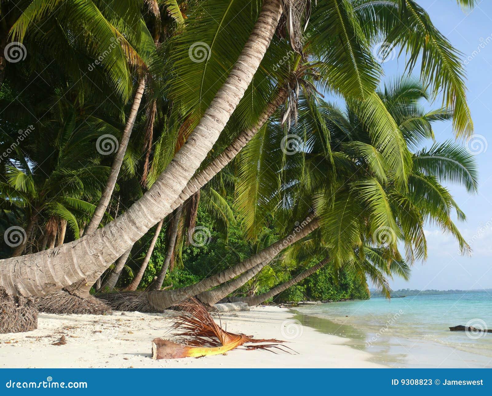 Strand nr 5, Havelock Eiland, Andaman Eilanden, Ind.