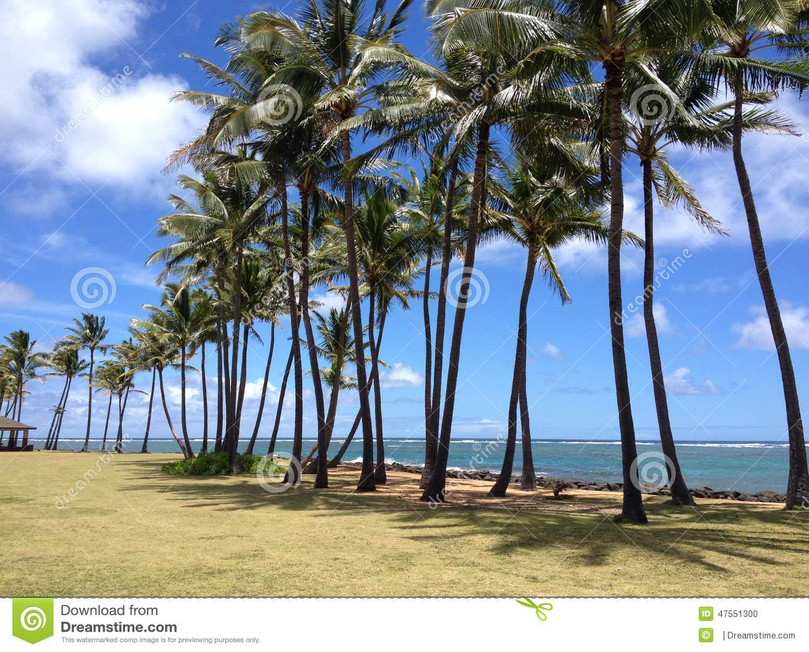 strand palmen stockfoto bild 47551300. Black Bedroom Furniture Sets. Home Design Ideas