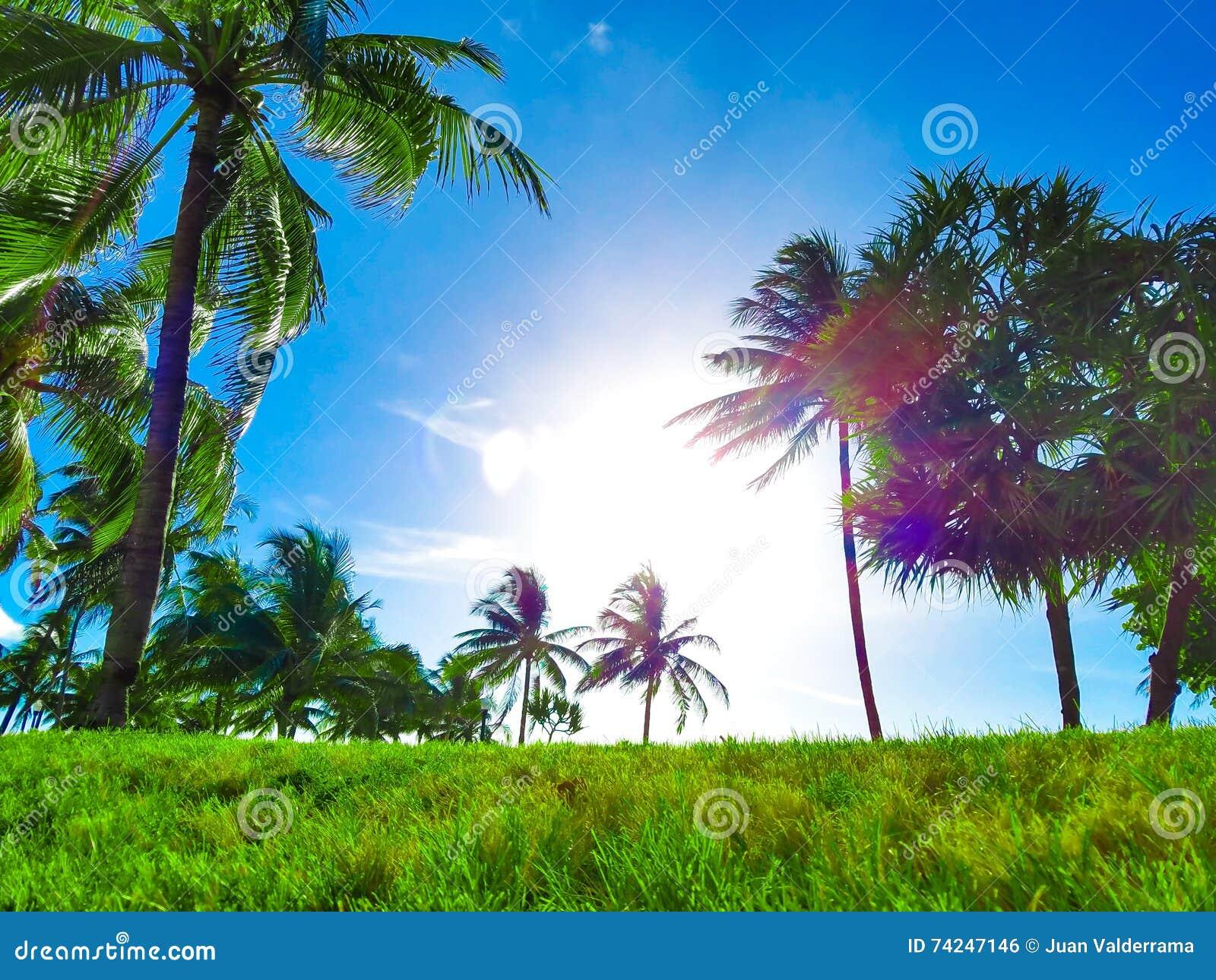Strand-Paradies, blauer Himmel, grüne u. lebendige Palmen und Gras