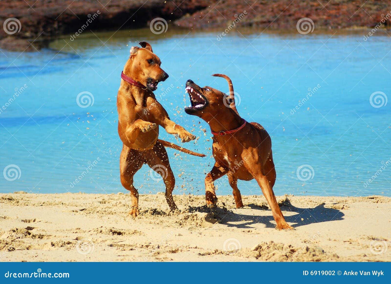 Stranden dogs stridighet