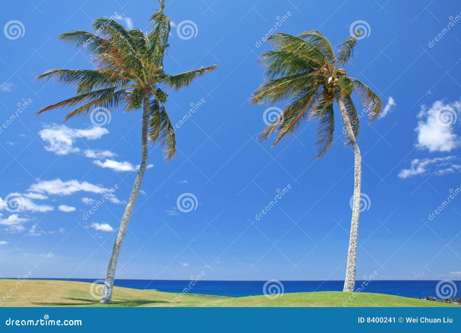 Stranden gömma i handflatan trees två