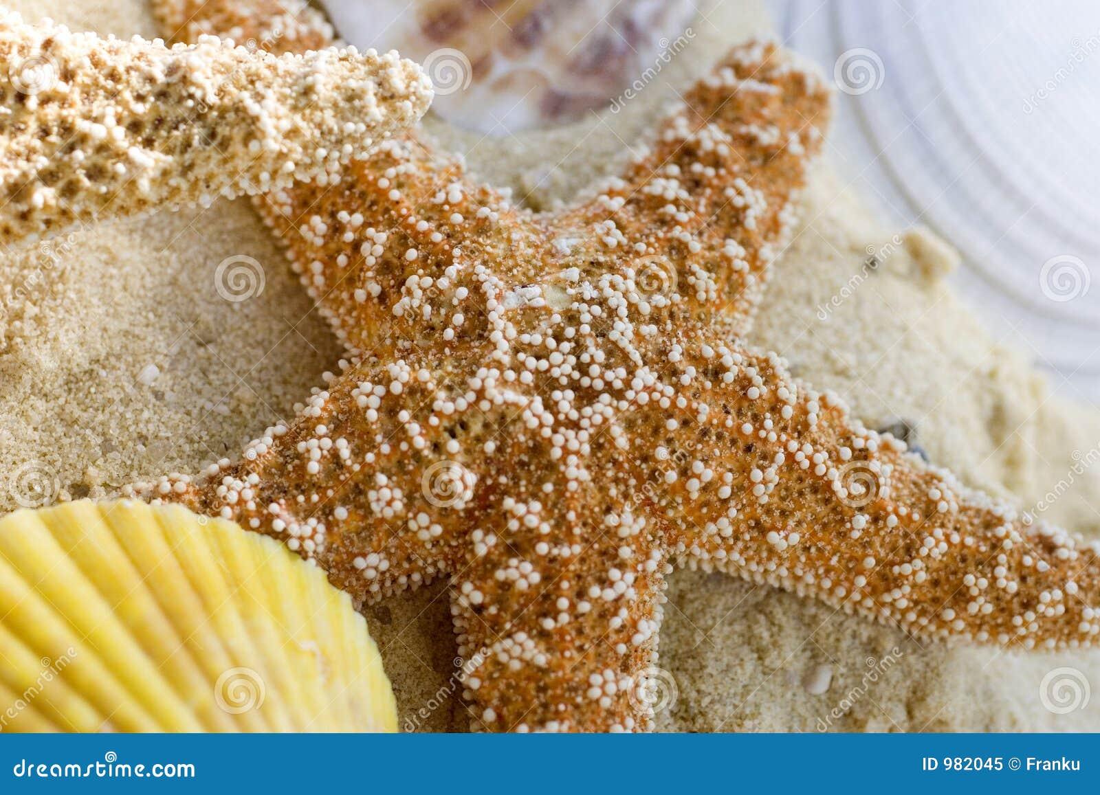 Stranden shells sjöstjärnan