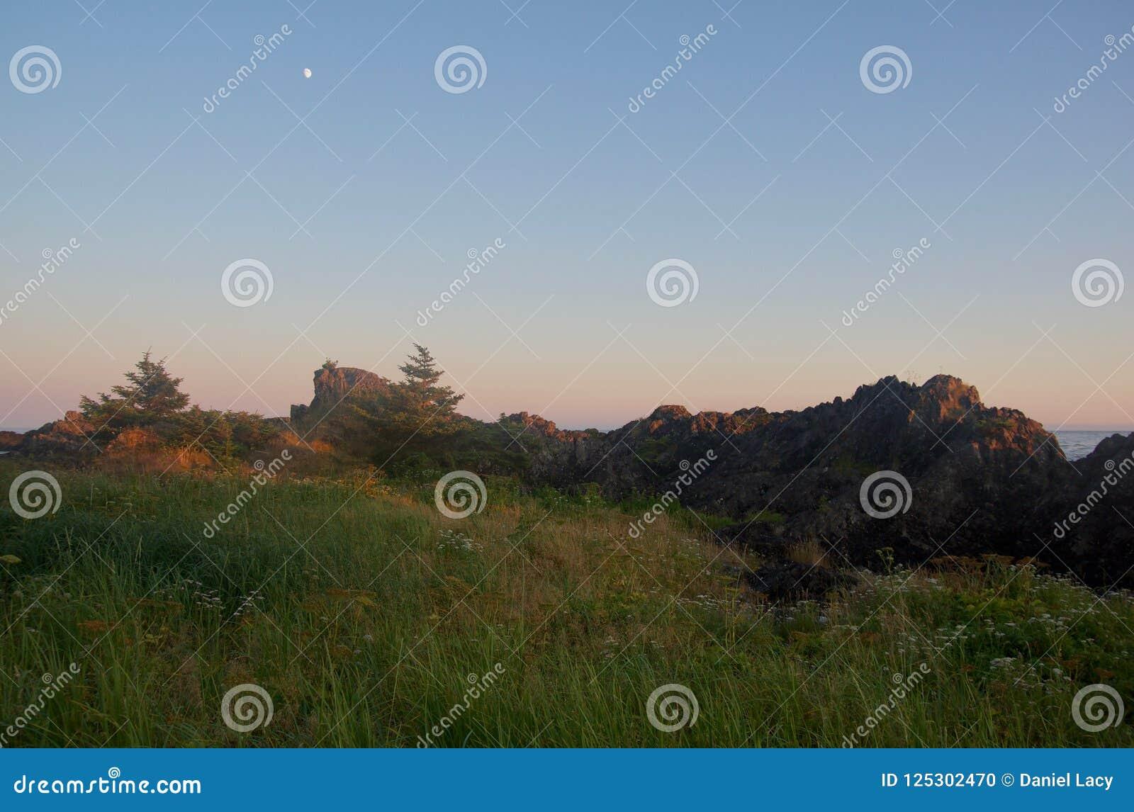 Strandgras en bloemen dichtbij rotsachtige kust bij zonsondergang met maan lucht