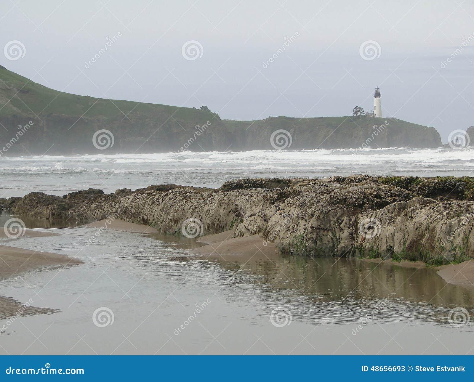 Strandkelp vaggar seaweed
