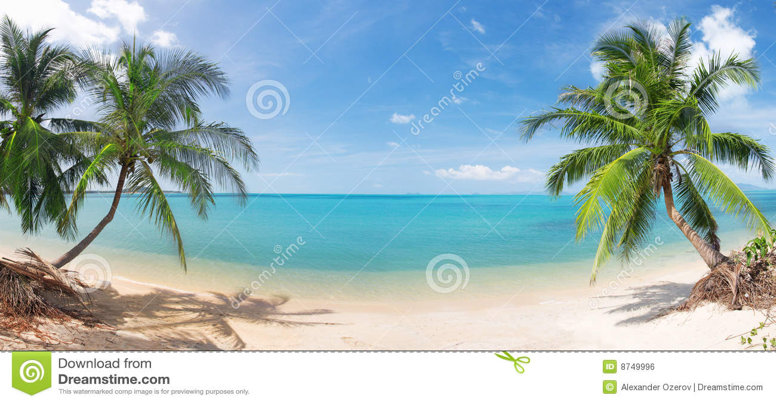 Strandkokosnöten gömma i handflatan panorama- tropiskt