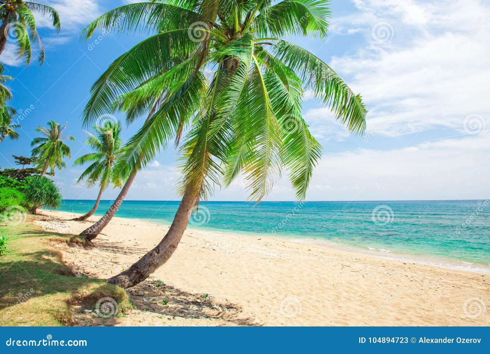 Strandkokosnöten gömma i handflatan tropiskt