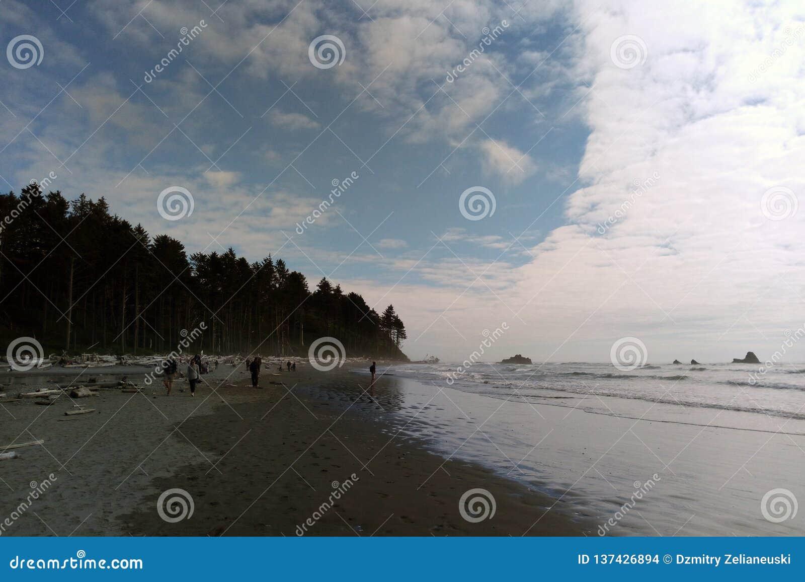 Strandkustlinje i den olympiska nationalparken, den olympiska halvön nära Seattle