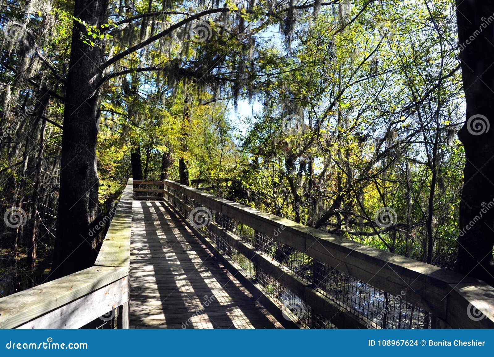 Strandpromenadtunnel och tunnel av träd