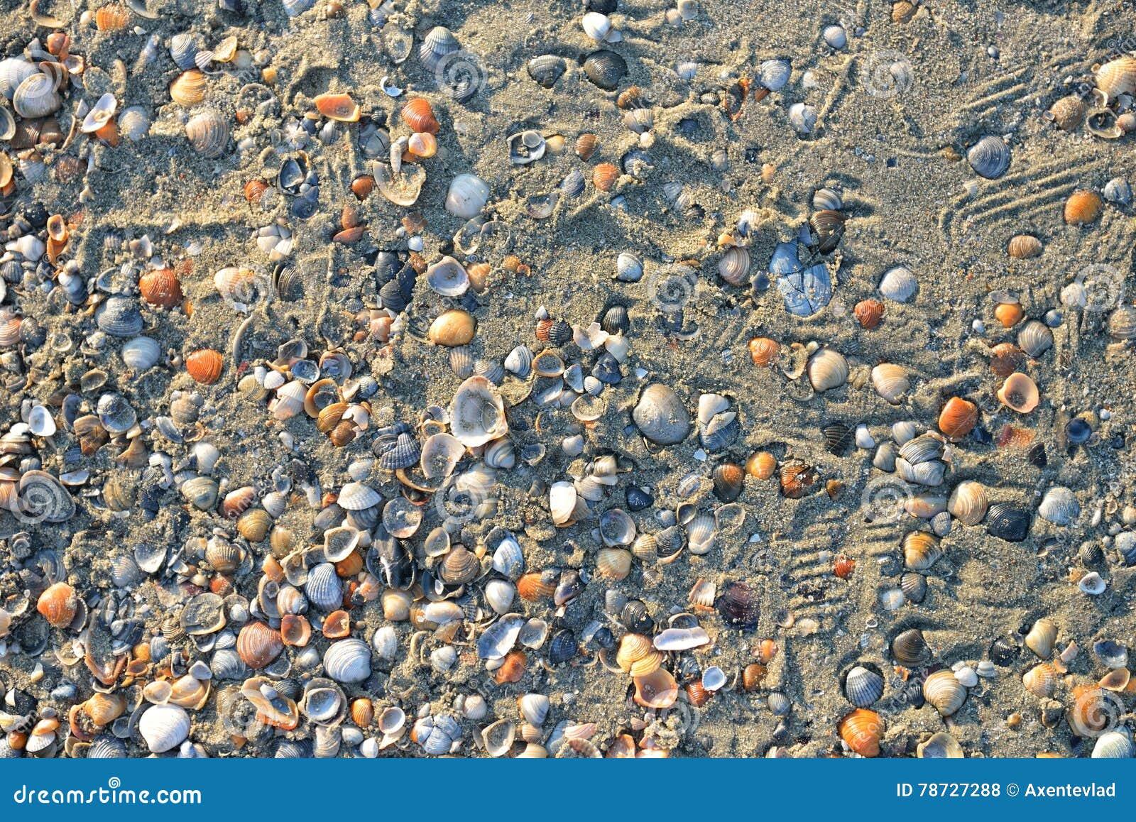 Strandsand med snäckskal som bakgrund textur