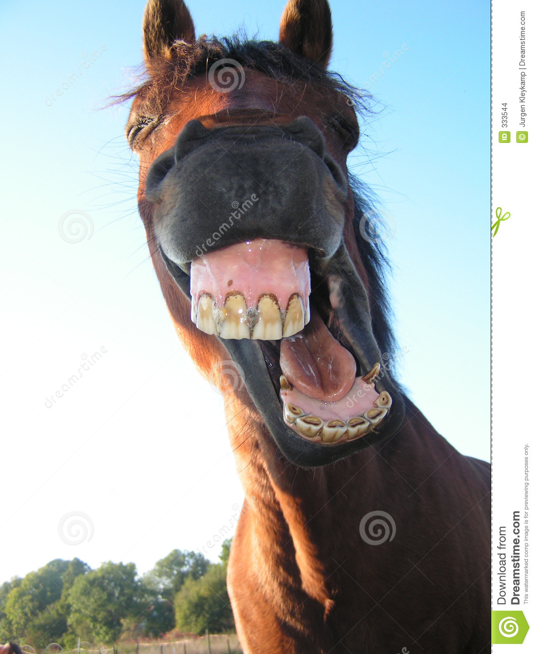 Strange facial expression of a horse