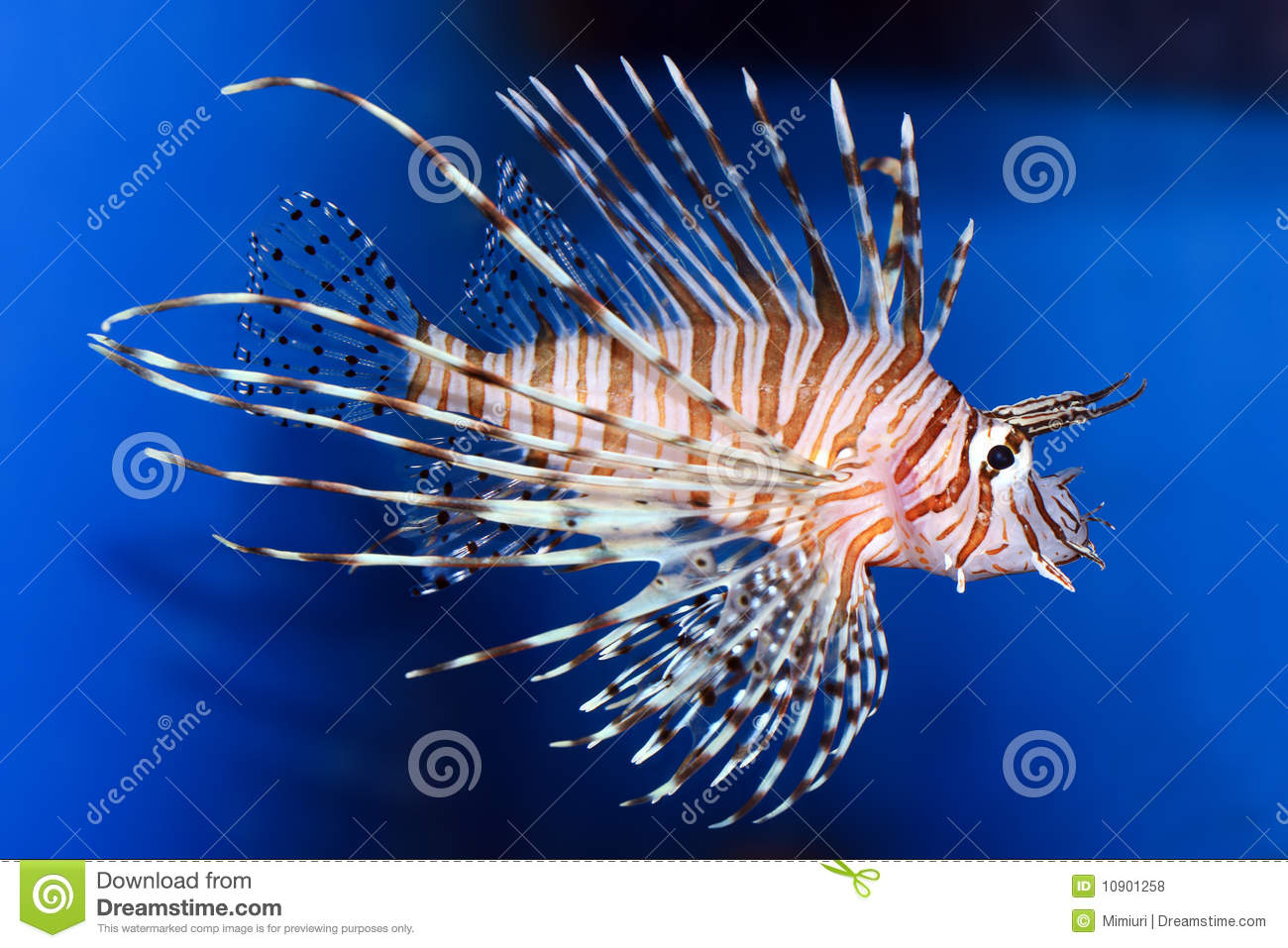 Strange Fish Royalty Free Stock Photos - Image: 10901258