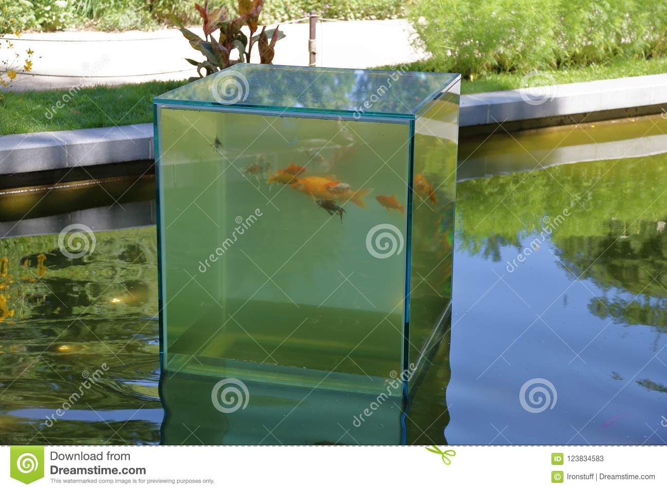 Strange Glass Aquarium With Fish Stock Image Image Of Pond Water
